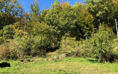 Planung Erdarbeiten Zufahrt und Garten